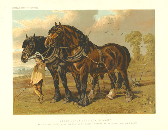 Clydesdale Stallion & Mare with plough and farmer, c1874.