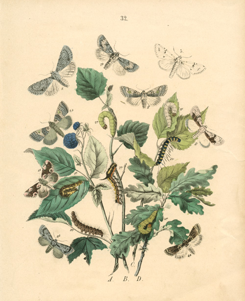 Discounted Pretty Moths, Foliage, Berries and Caterpillars c1840