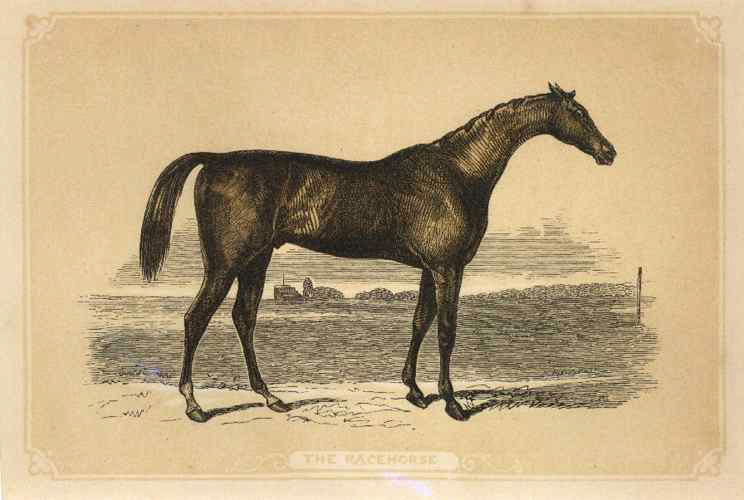 The Racehorse, small colour-printed engraving by Bicknell, c1859.