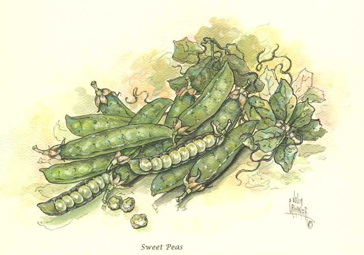 Sweet Peas in Pods. Crainer small vegetable print.