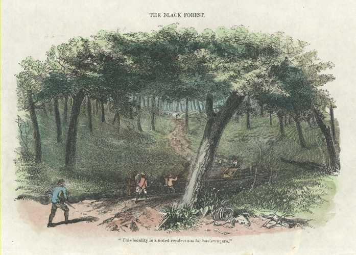 Gold. Bushrangers. The Black Forest. Sherer antique print c1853.