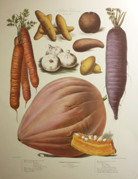 Vilmorin Vegetables: Carrots, Potatoes, Radish, Garlic & Squash. Print.
