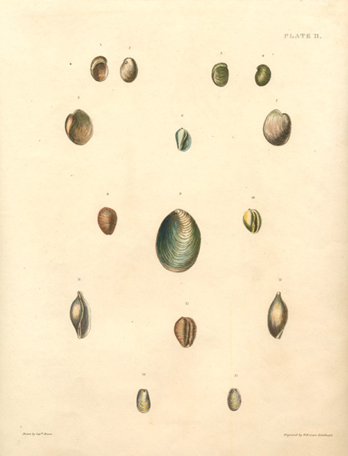 Carefully-displayed group of small Molluscs by Captain Brown c1845.