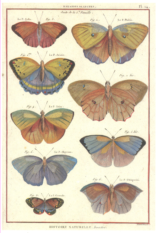 Danaides Butterfly family. Panckouke Natural History Insects 14.