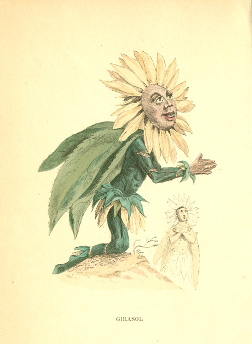 Sunflower worshipping the Sun. Grandville Girasol, engraved c1902.