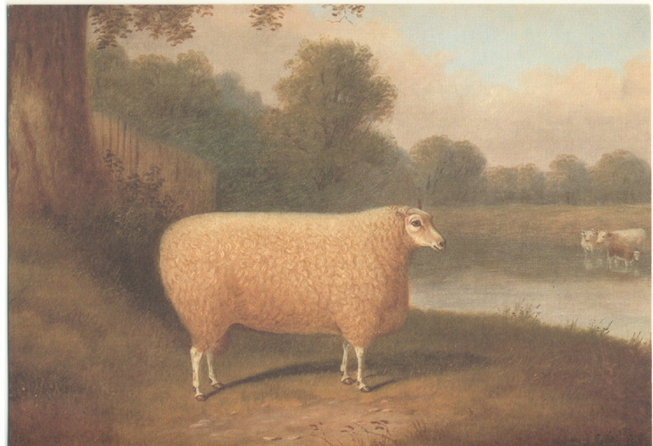 Sheep print from oil painting c1877 by E. Corbett.