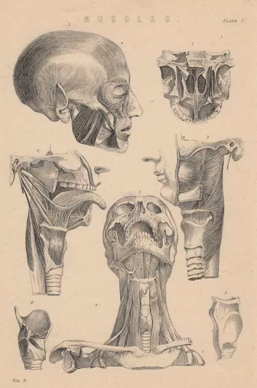 Neck & Head, Muscles Physiology antique print c1880