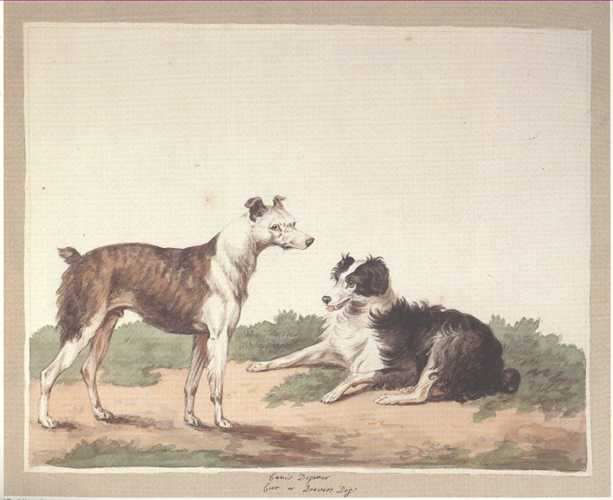 Dog Print: Drovers Dogs. Reproduction from a Sydenham Edwards watercolour
