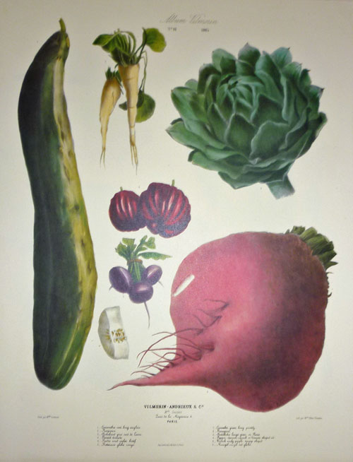 Unusual Vegetables print by Vilmorin: Artichoke, Cucumber, Peppers..
