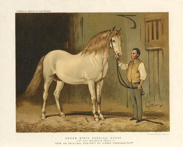 Cream State Carriage Horse (of Her Majesty's Stud) c1874.
