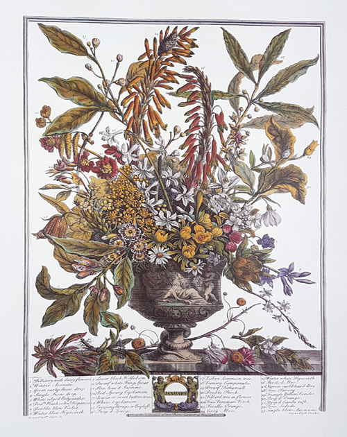 Furber's Flower Vase 1. Fine reproduction print