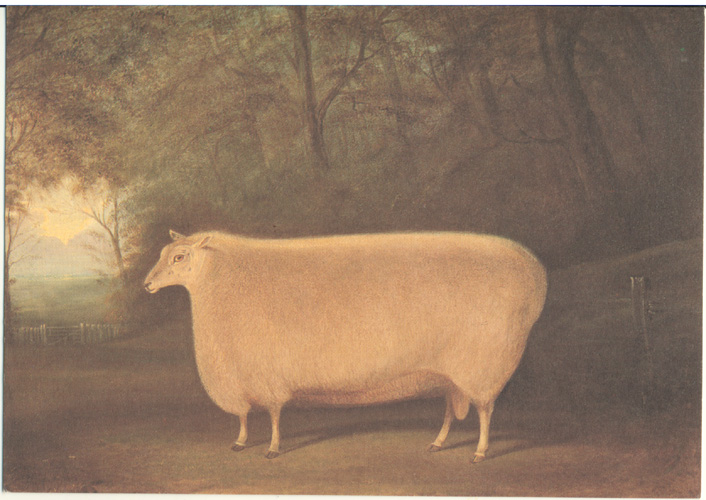 A Prize Ram small print from painting c1850.