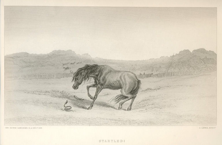 Startled Horse with Snake, engraved after Edwin Landseer.