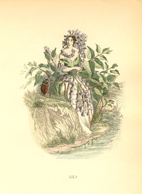 Lilac flower lady (Lila). Grandville Animated Flowers engraving c1902