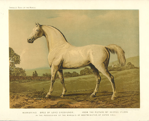 Mambrino lithograph c1874, after painting by George Stubbs.