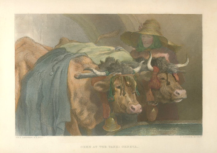 Landseer, Oxen at the Tank: Geneva. Antique print c1878.